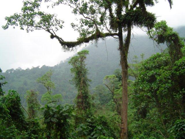 równikowy las deszczowy